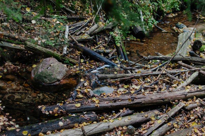 Steine verzweigt sich und gefallene Blätter im Wasser stockfotos