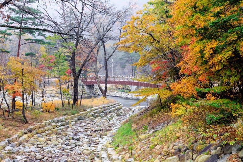 Steinflussbett an Nationalpark Seoraksan während der Herbstsaison lizenzfreies stockfoto