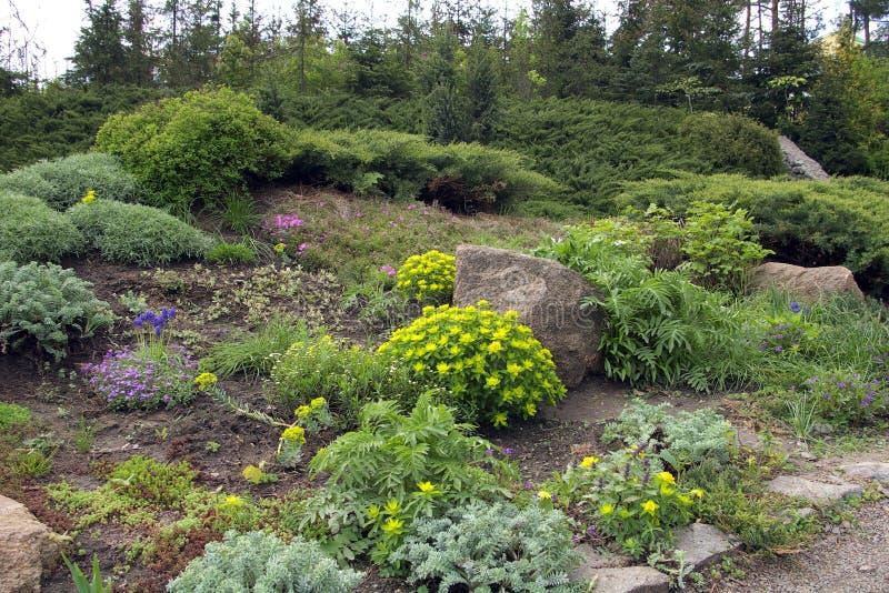 Steingehweg, der Blumen durchläuft lizenzfreie stockfotos