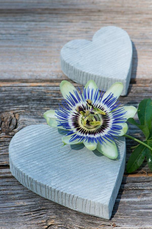 Steinherz zwei mit Leidenschaftsblume auf hölzernem Hintergrund stockbilder