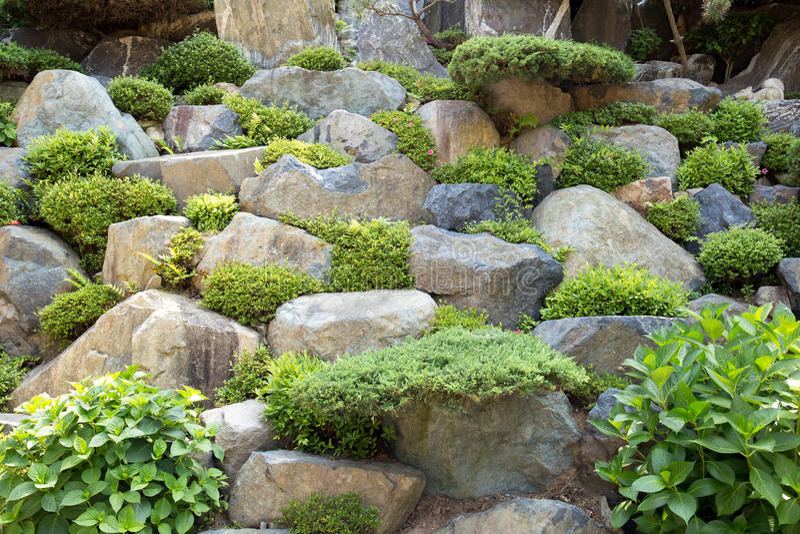 Steinhintergrundwand mit Grünpflanze stockfotos