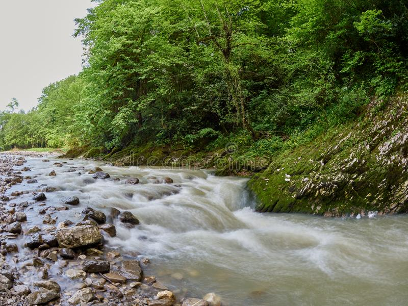 Steiniger Gebirgsstrom mit dichtem grünem Wald auf dem Ufer stockfotos