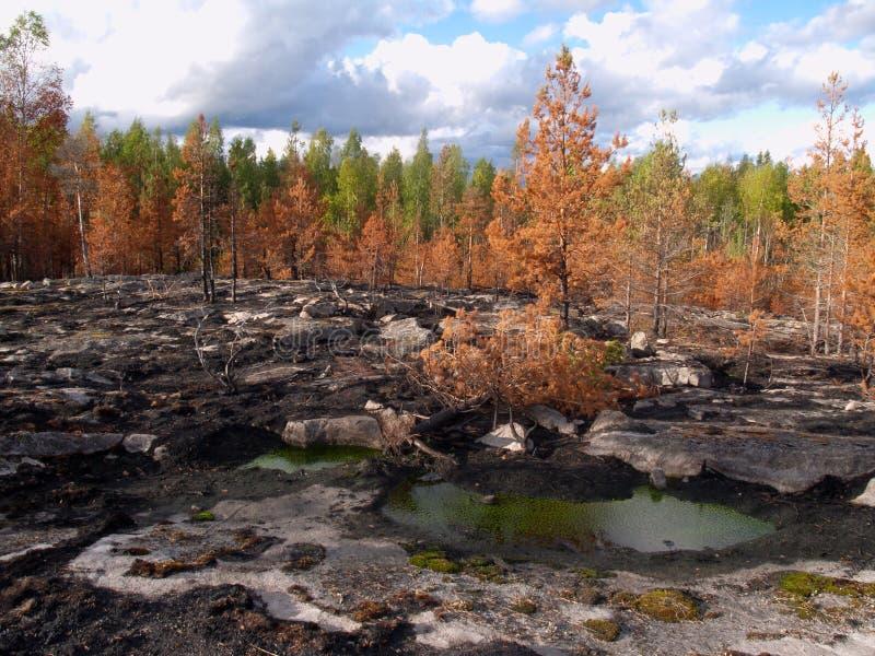 Steiniger Wald stockbilder