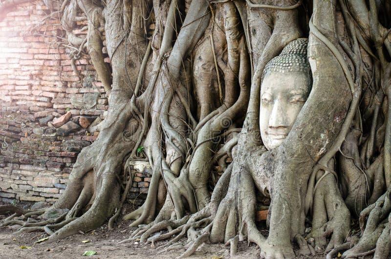 Steinkopf von Buddha im Wurzelbaum lizenzfreies stockbild