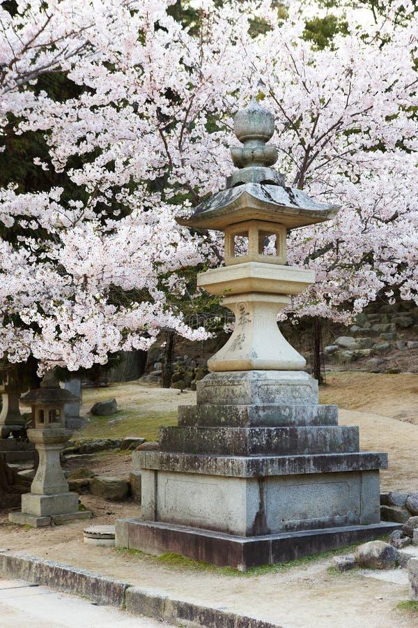 Steinlaterne mit Kirschblüten lizenzfreie stockbilder