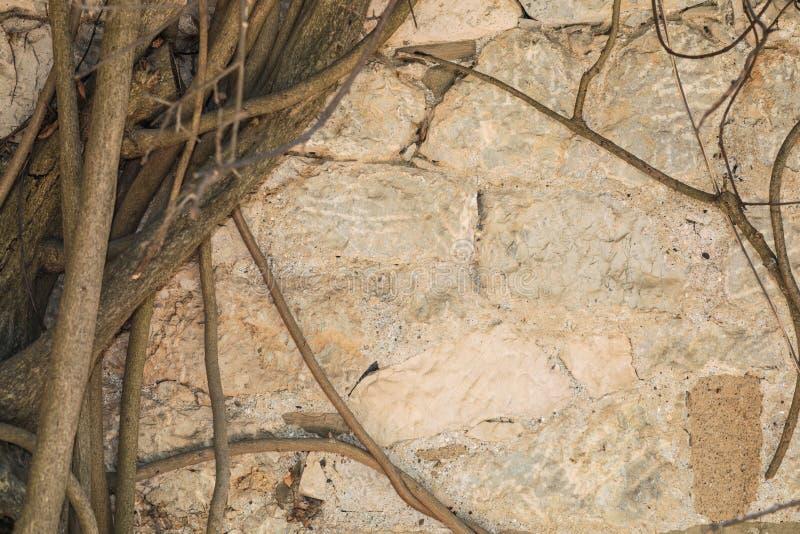 Steinmetzarbeit mit Baumwurzelhintergrund stockfotos