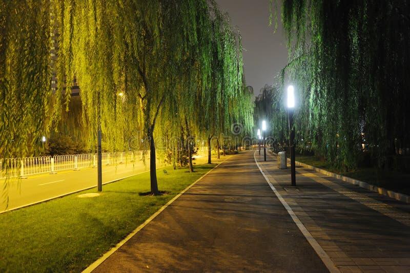 Steinpfad mit Bäumen nachts stockfoto