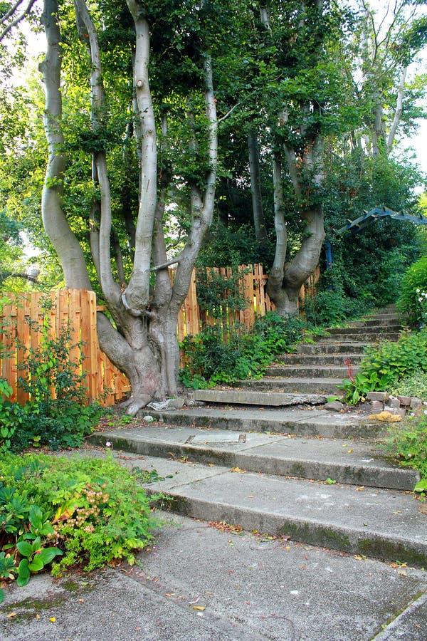 Steintreppe im Garten lizenzfreie stockbilder