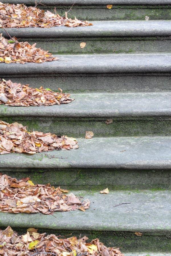 Steintreppe mit Wind-durchgebranntem Herbstlaub stockbild