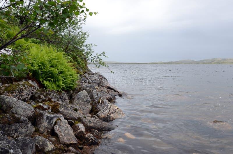 Steinufer in der arktischen Tundra lizenzfreie stockbilder