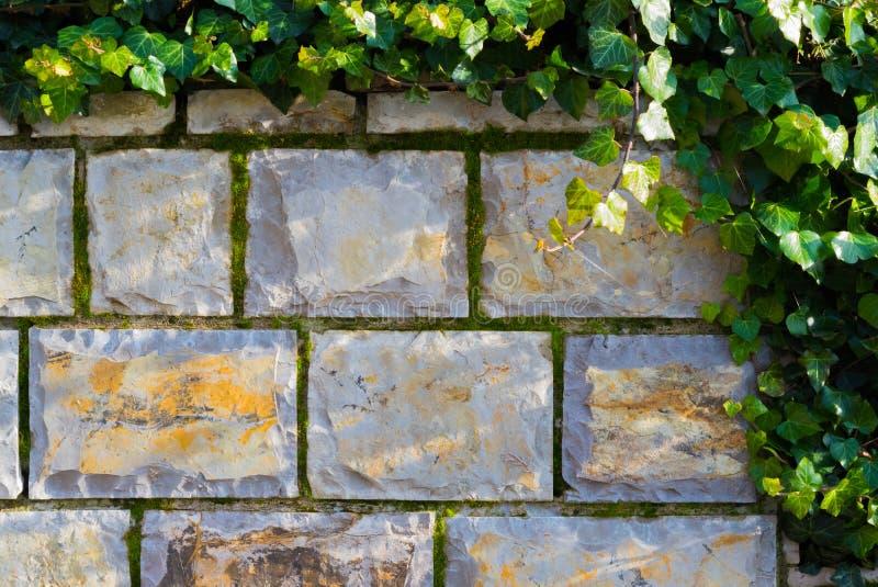 Steinwand mit Efeu und Moos stockfotografie
