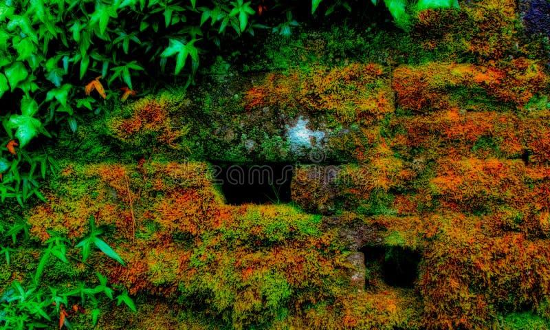 Steinwand mit Vegetation stockbilder