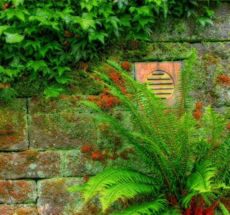 Steinwand mit Vegetation lizenzfreie stockfotos