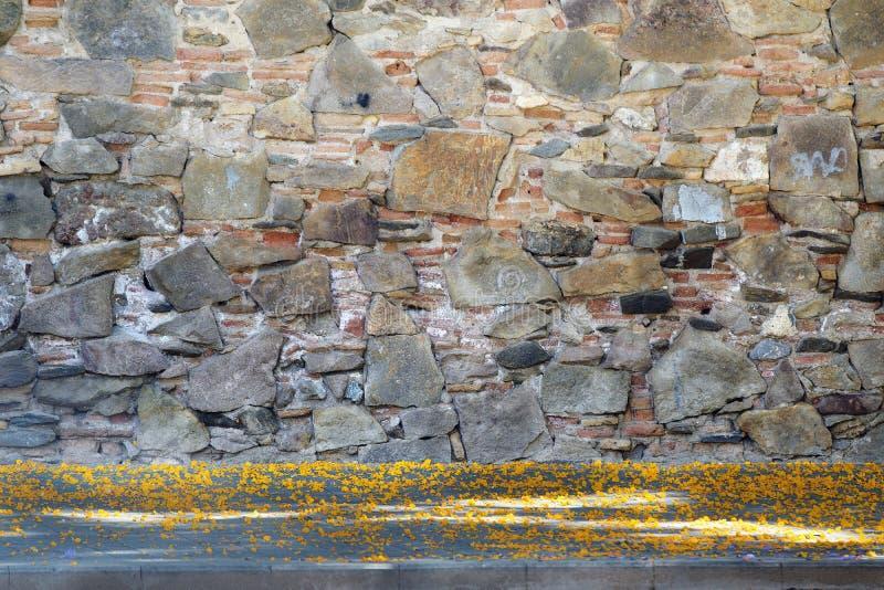 Steinwand-Tageszeit und einige gelbe Tipuana tipu Blumenblätter auf dem Boden Keine Leute und leerer Kopienraum stockbild