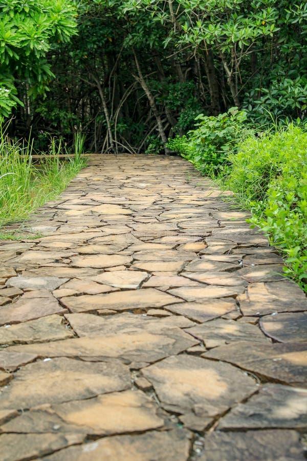 Steinwegweise zum Wald bei Thailand gehen stockfoto