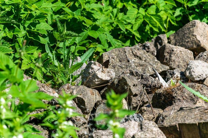 Steinziegelstein tectured Muster in der Natur stockbilder