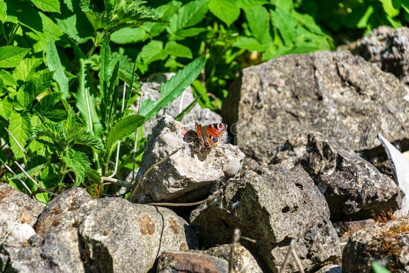 Steinziegelstein tectured Muster in der Natur stockbild