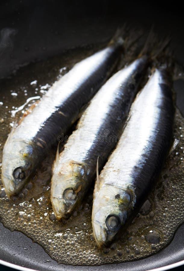 steka sardine royaltyfria bilder