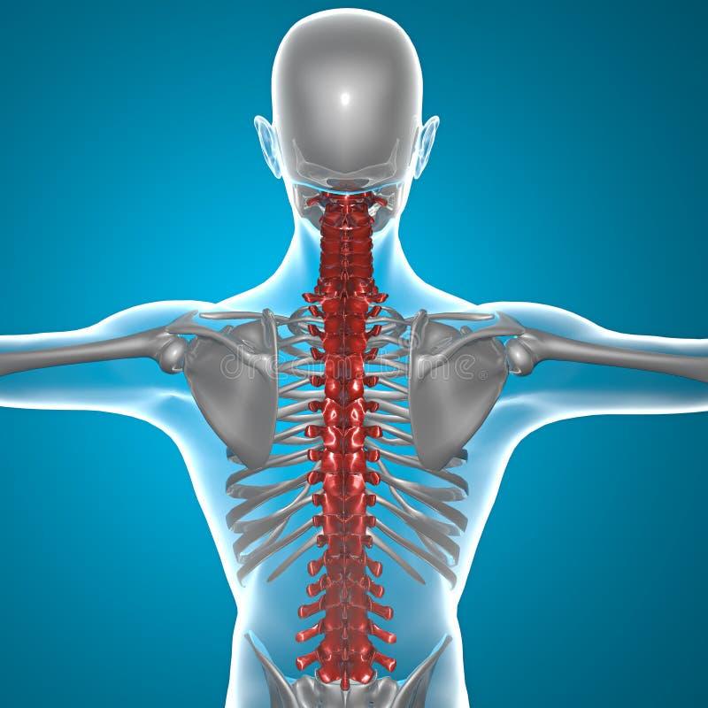 Stekel x-ray skelet vector illustratie
