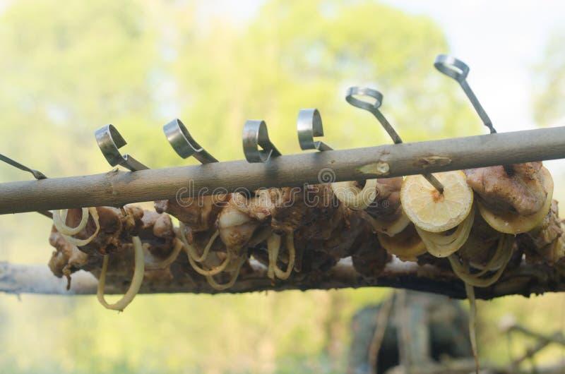 Steknålar på naturen fotografering för bildbyråer