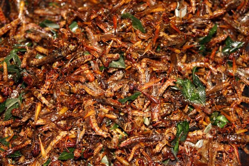 stekt gräshoppa arkivbilder