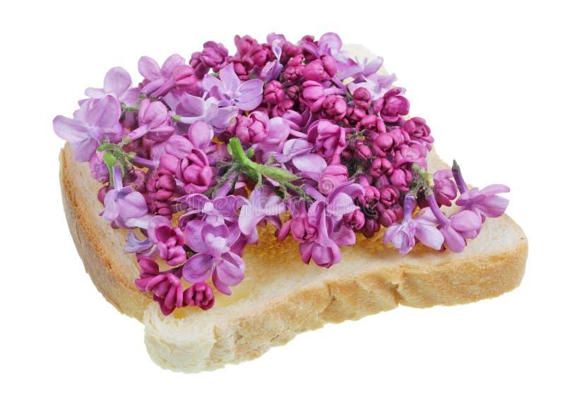 Stekt rostat brödbröd med kronblad av den purpurfärgade lilan för våren flowers- isolerad exotisk mat royaltyfri foto
