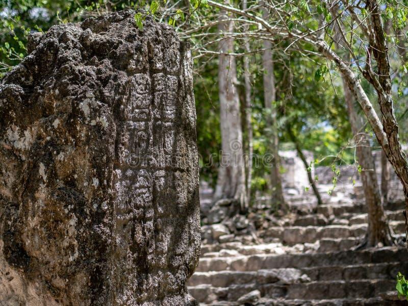Stela maya en la selva mexicana con la escritura jeroglífica en C imágenes de archivo libres de regalías