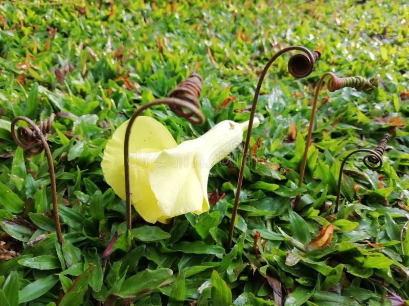 Stelen met bloem stock fotografie