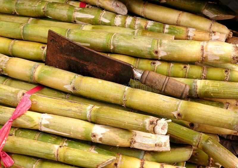 Stelen van Vers Sugar Cane royalty-vrije stock fotografie