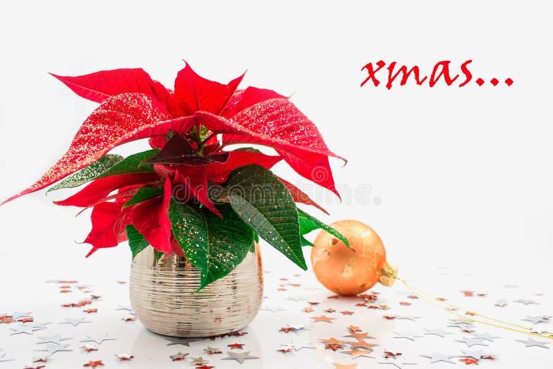 Stella di Natale immagine stock