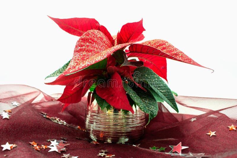 Stella di Natale immagine stock libera da diritti