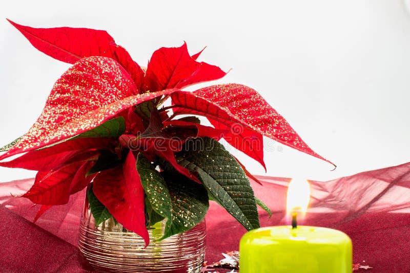 Stella di Natale immagini stock