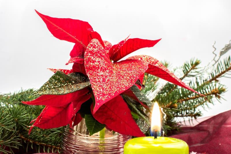 Stella di Natale fotografia stock libera da diritti