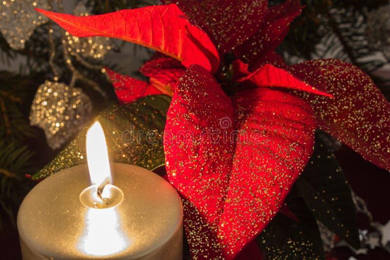 Stella di Natale immagini stock libere da diritti