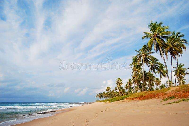 Stella Maris Beach arkivbild