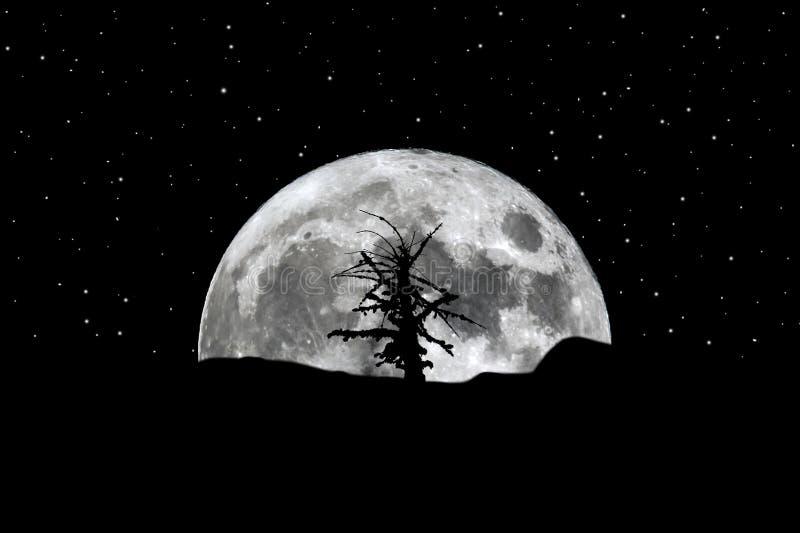 Stelle in aumento dell'albero della siluetta della luna piena immagini stock