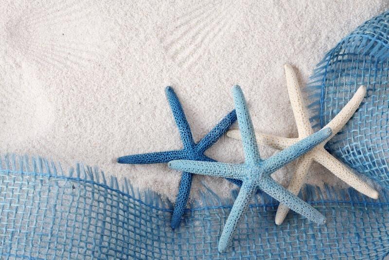 Stelle di mare bianche e blu immagine stock