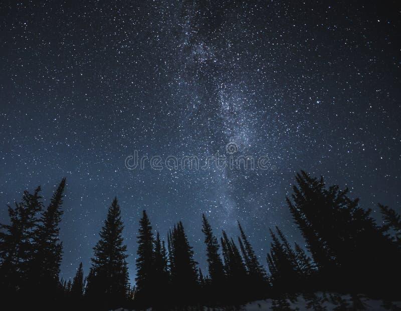 Stelle e Via Lattea sopra la foresta scura immagini stock libere da diritti