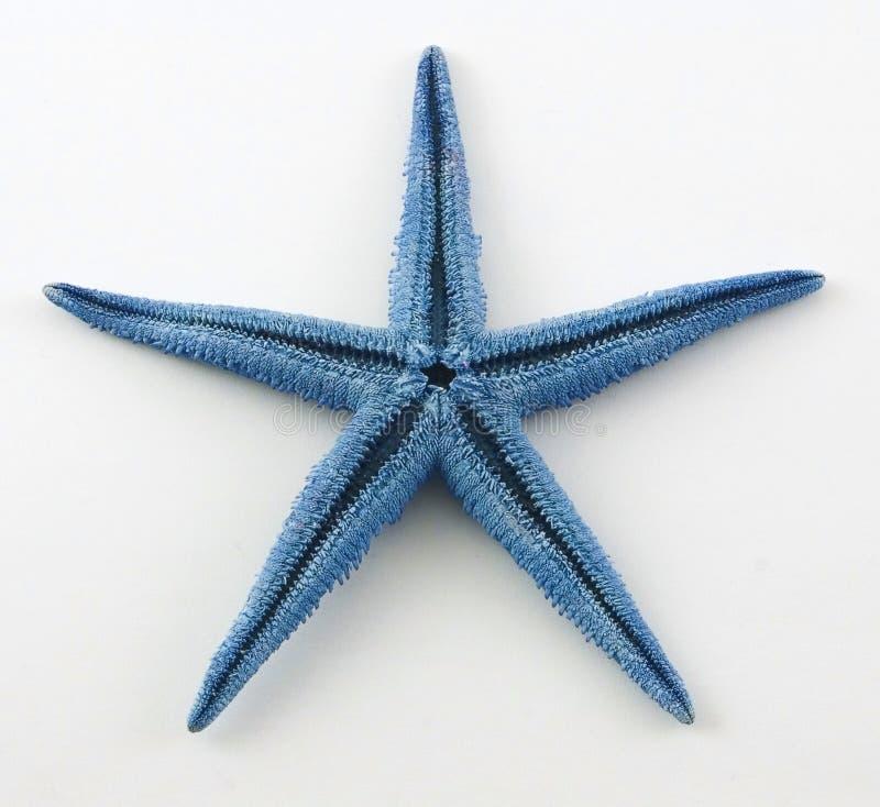 Stelle marine immagine stock libera da diritti