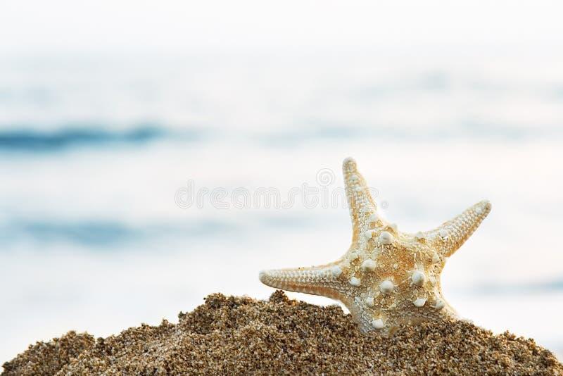 Stelle marine fotografie stock libere da diritti