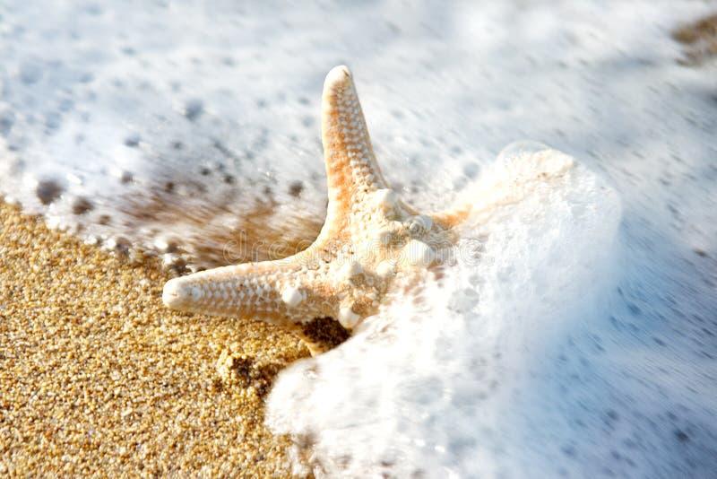 Stelle marine immagini stock libere da diritti