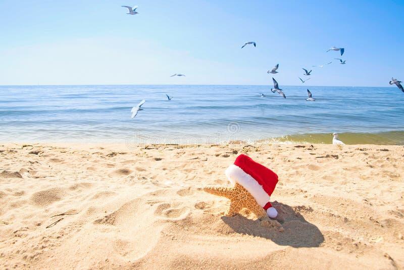 Stelle marine con il cappello di Natale in sabbia della spiaggia con il gabbiano fotografie stock libere da diritti
