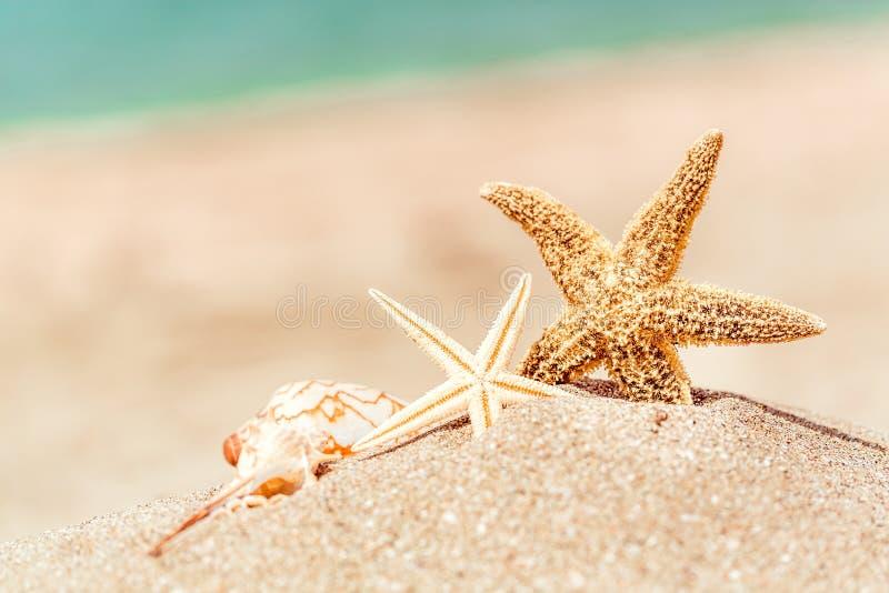 Download Stelle Marine Con L'oceano, La Spiaggia E La Vista Sul Mare, Bassi Immagine Stock - Immagine di turismo, sabbia: 117979081