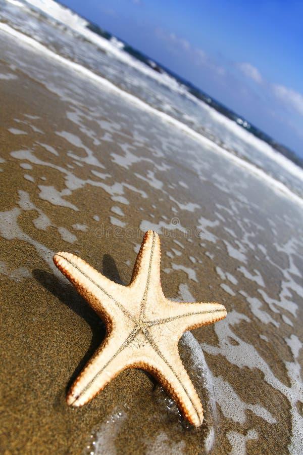 Stelle marine della spiaggia fotografia stock