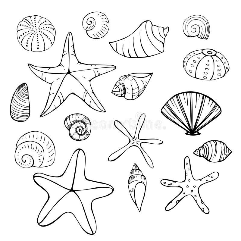 Stelle marine e conchiglie Illustrazione di schizzo di vettore illustrazione di stock