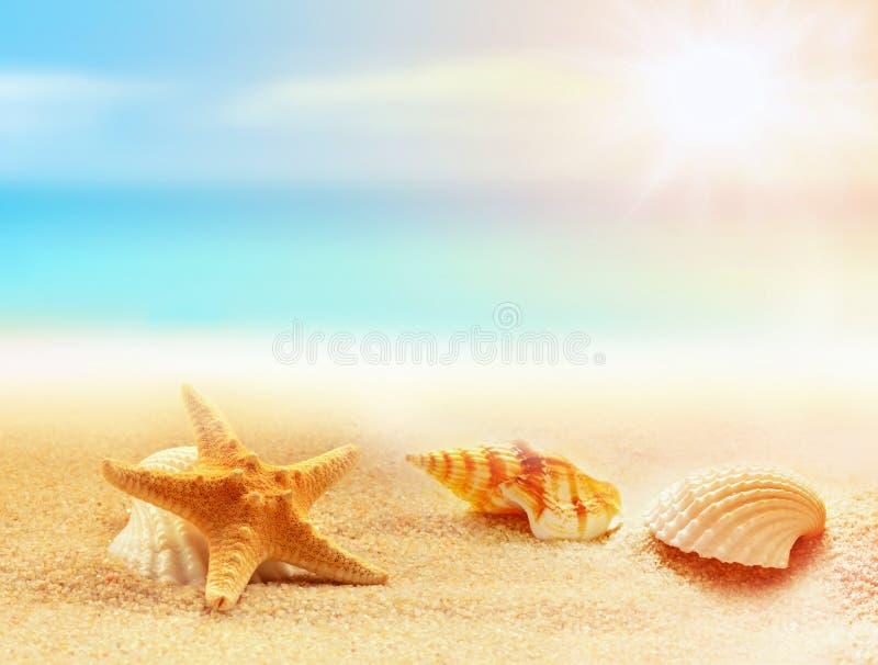 Stelle marine e conchiglie sulla spiaggia Giovani adulti fotografie stock libere da diritti