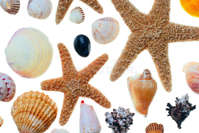 Stelle marine e coperture fotografie stock libere da diritti