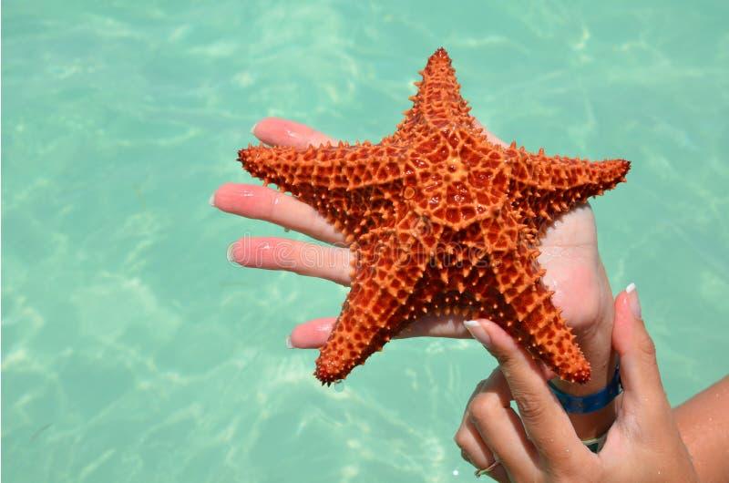 Stelle marine rosse in mani femminili su un fondo di bello mare Il concetto di una festa della spiaggia immagini stock libere da diritti