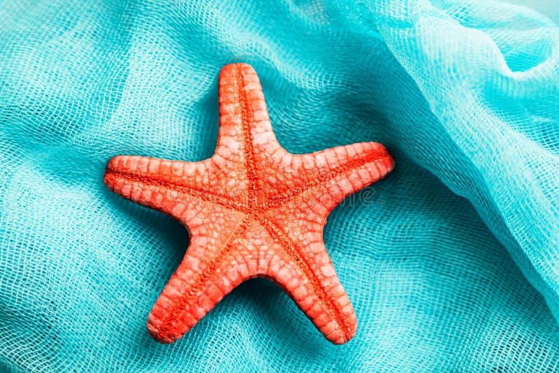 Stelle marine secche del Mar Rosso sul fondo cian del panno immagine stock