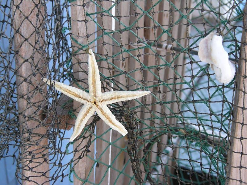 Stelle marine su rete fotografia stock